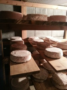 cheese_factory _3